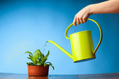 Hand watering a plant with watering-can — Stock Photo