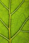 Green leaf backdrop — Stock Photo