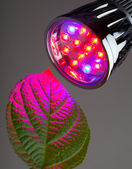 LED light for plant growing — Stock Photo