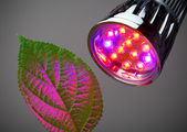 LED grow light — Stock Photo