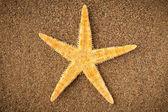 Estrela do mar na praia de areia — Foto Stock