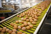 鸡蛋生产线 — 图库照片