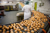 Eggs production line — Foto de Stock