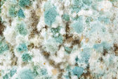 Mold — Stock Photo