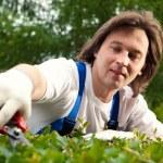 Gardener cutting a bush — Stock Photo #10242142
