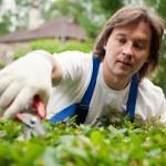 Gardener cutting a bush — Stock Photo #10242148