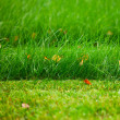 Royalty-Free Stock Photo: Green lawn