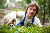 Gardener cutting a bush — Stock Photo