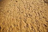 Sand trampade med barfota publiken — Stockfoto