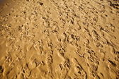 Sand trampled with barefoot crowd — Stock Photo