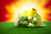 Happy easter chick — Stock Photo