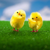 Happy easter chicks — Stock Photo