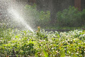 Garden watering, huge amount of water drops — Stock Photo
