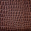 Reptile skin texture. — Stock Photo