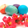 Easter eggs and pink blossom - Foto de Stock