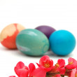 Easter eggs and pink blossom - Photo