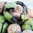 Unripe walnuts — Stock Photo #10529475
