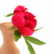 Red flower on a clay vase — Stock Photo