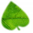 Green leaf shapes — Stock Photo