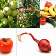 Fruits and vegetables collage — Stock Photo #9846069