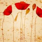 Beautiful poppies background illustration — Stock Vector