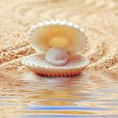 Una concha de mar abierto con una perla dentro. — Foto de Stock