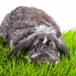 Adorable rabbit isolated on a white background. - Stock Photo