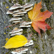 Maple autumn leaf on a tree trunk — Stockfoto