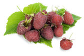 Real garden raspberry berries — Foto de Stock