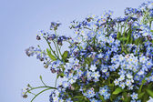 Forget me nots Myosotis spring background — Stock Photo