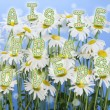 Daisies for lovers — Stock Photo