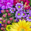 Flowers for the sprin girlfriend - Foto de Stock