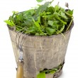 Old  bucket full of garden weeds - Stock Photo