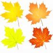 Autumn maple leaves set — Stock Photo