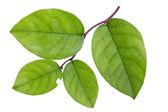 Textured green branch — Foto de Stock