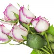 Wilting delicate pink roses single — Stock Photo