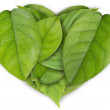 Green leaves heart — Stock Photo