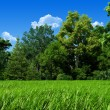 Very detailed 7000px forest glade template - Nature — Stock Photo #9599720
