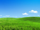 Nature collection - Green meadow template — Stock Photo