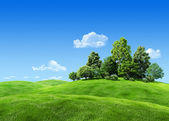 Very detailed 7000px trees on hill - nature collection — Stock Photo
