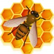 Bee with honeycomb — Stock Vector