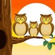 Owl family with sunset background — Stock Vector