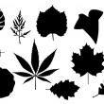 hojas — Vector de stock