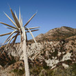 Agave on island Zakynthos — Stock Photo #10541516