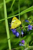 бабочка и цветы на лугу — Стоковое фото