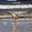 Stock Photo: Seagull on beach