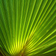 Green palm fronds — Stock Photo