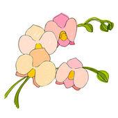 иллюстрированный милый цветок для вашего весна дизайн — Стоковое фото