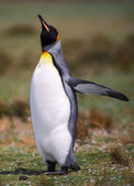 Emperor penguin — Stockfoto
