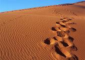Footprint on sand — Stock Photo